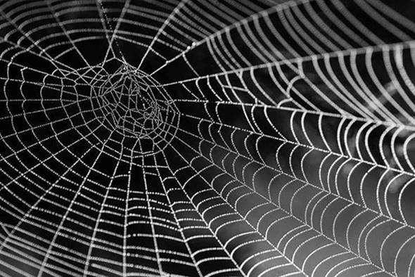 image001 - The Wide Web of Communication